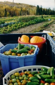 the excellent microclimate allows farmers to grow all sorts of vegetables
